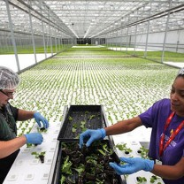 Green City Growers Cooperative's 3.25-acre hydroponic greenhouse in the Central neighborhood opened in 2013.