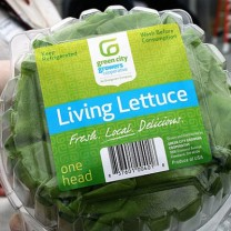 Green City Growers supplies Bibb lettuce, green leaf lettuce, gourmet lettuces and basil to institutional and commercial customers.